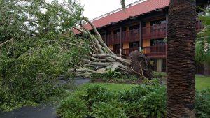 Disney Hurricane irma