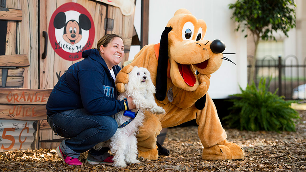 Can Dogs Go To Disneyworld
