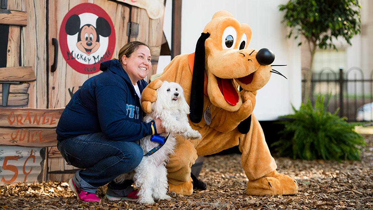 Dog at Walt Disney World