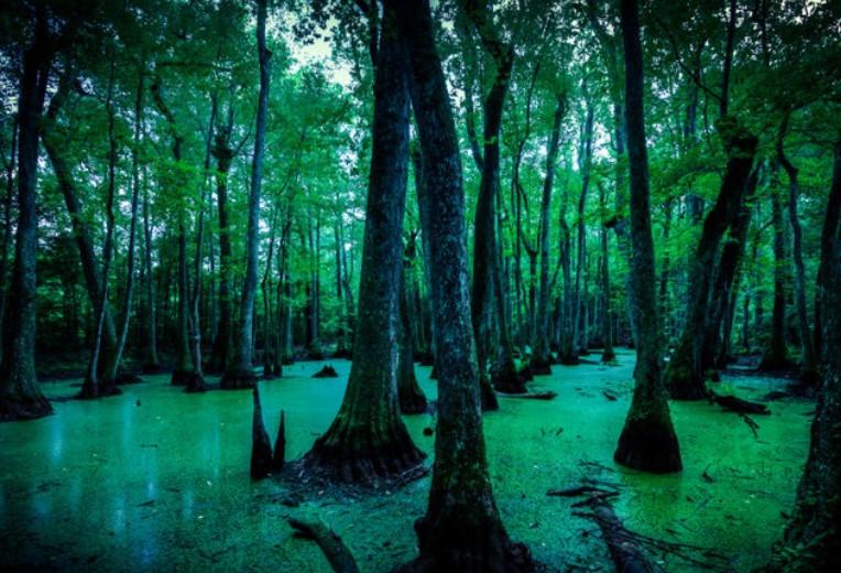 LouisianaBayous